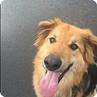 Adopt A Pet :: Samantha - Bellingham, WA