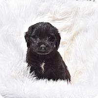 Adopt A Pet :: Tyke - Groton, MA