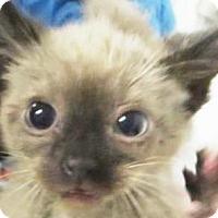 Adopt A Pet :: Julie - Lincolnton, NC