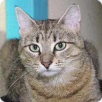 Adopt A Pet :: Anastasia - Middletown, CT