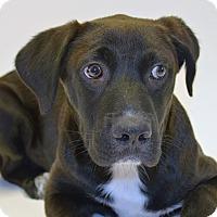 Adopt A Pet :: Thunder - Brunswick, ME