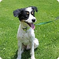 Adopt A Pet :: Rudy - Arlington, TN