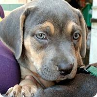 Adopt A Pet :: Ribeye-Adopted! - Detroit, MI