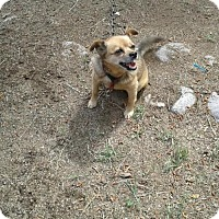 Terrier (Unknown Type, Medium) Mix Dog for adoption in Chama, New Mexico - Lucy