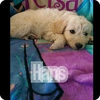 Adopt A Pet :: Hans - Alta Loma, CA