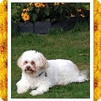 Adopt A Pet :: Fiji - NY - Tulsa, OK