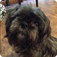 Adopt A Pet :: Sam - Bernardston, MA