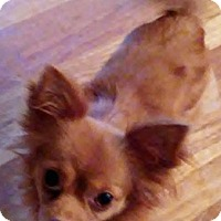 Adopt A Pet :: Paige - St Louis, MO