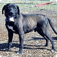 Adopt A Pet :: Tyson - Yreka, CA