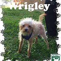 Adopt A Pet :: Wrigley - Fallston, MD