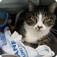 Adopt A Pet :: Tobias - Cody, WY