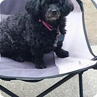 Adopt A Pet :: MISSY - Speedway, IN