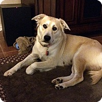 Adopt A Pet :: Leah - Austin, TX