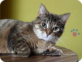 Domestic Shorthair Cat for adoption in Lake City, Michigan - Hazel