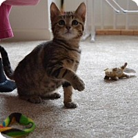 Adopt A Pet :: Lincoln - Mattoon, IL