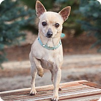 Adopt A Pet :: Dory - Washoe Valley, NV