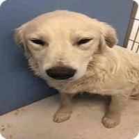 Adopt A Pet :: MARC - Frisco, CO