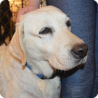 Adopt A Pet :: Steffi - Prole, IA