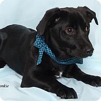 Adopt A Pet :: Frankie - Kerrville, TX