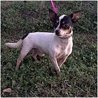 Adopt A Pet :: Lucky - Comanche, TX