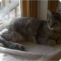 Adopt A Pet :: Sophie - Richmond, VA