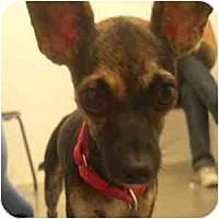 Adopt A Pet :: Addison - Phoenix, AZ