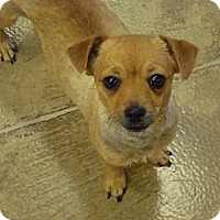 Adopt A Pet :: Miss Lilly - Wickenburg, AZ