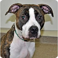 Adopt A Pet :: Randi - Port Washington, NY