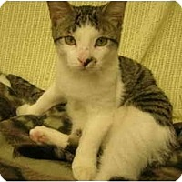 Adopt A Pet :: Smudge - Windsor, ON