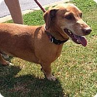 Adopt A Pet :: Randolph - York, SC