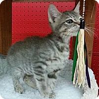Adopt A Pet :: S'mores - Phoenix, AZ