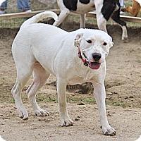 Adopt A Pet :: Sandy - Albany, NY