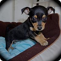 Adopt A Pet :: Jeni - La Habra Heights, CA