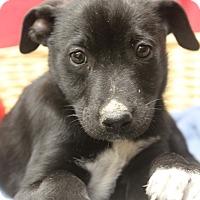 Adopt A Pet :: Rusty - Waldorf, MD