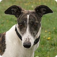Adopt A Pet :: Mary - Portland, OR