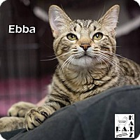 Adopt A Pet :: Ebba - Albuquerque, NM