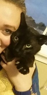 Domestic Mediumhair Cat for adoption in Franklin, Indiana - Starsky (Special Needs)