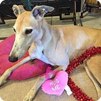 Adopt A Pet :: Rambunction aka Rams Rambuncti - Gainesville, FL