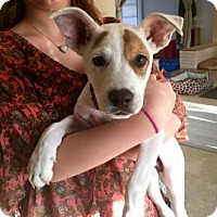 Adopt A Pet :: CHANCE BURFORD - Boca Raton, FL