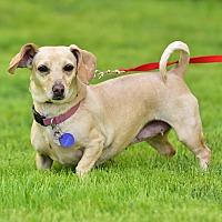 Adopt A Pet :: Selina - Santa Monica, CA