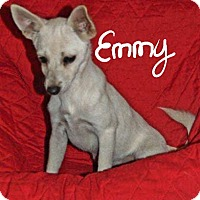Adopt A Pet :: Emmy - Sussex, NJ