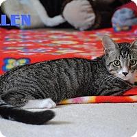 Adopt A Pet :: Allen - Friendly Boy! - Huntsville, ON