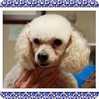 Adopt A Pet :: Brady - SE TX - Tulsa, OK
