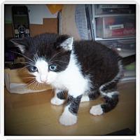 Adopt A Pet :: JORDON - Medford, WI
