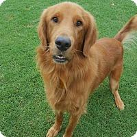 Adopt A Pet :: Iverson - Denton, TX