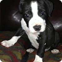 Adopt A Pet :: Alex - Hartford, CT