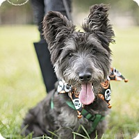 Adopt A Pet :: Pepper - Kingwood, TX