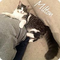 Adopt A Pet :: Milton - Troy, MI