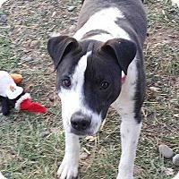 Adopt A Pet :: Petal - Denver, CO
