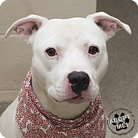 Adopt A Pet :: Buddy - Troy, OH